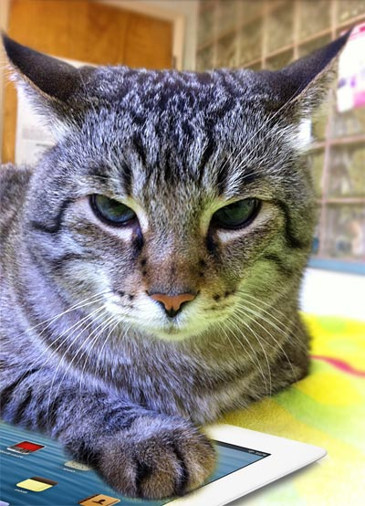 Image Gallery irritated cat