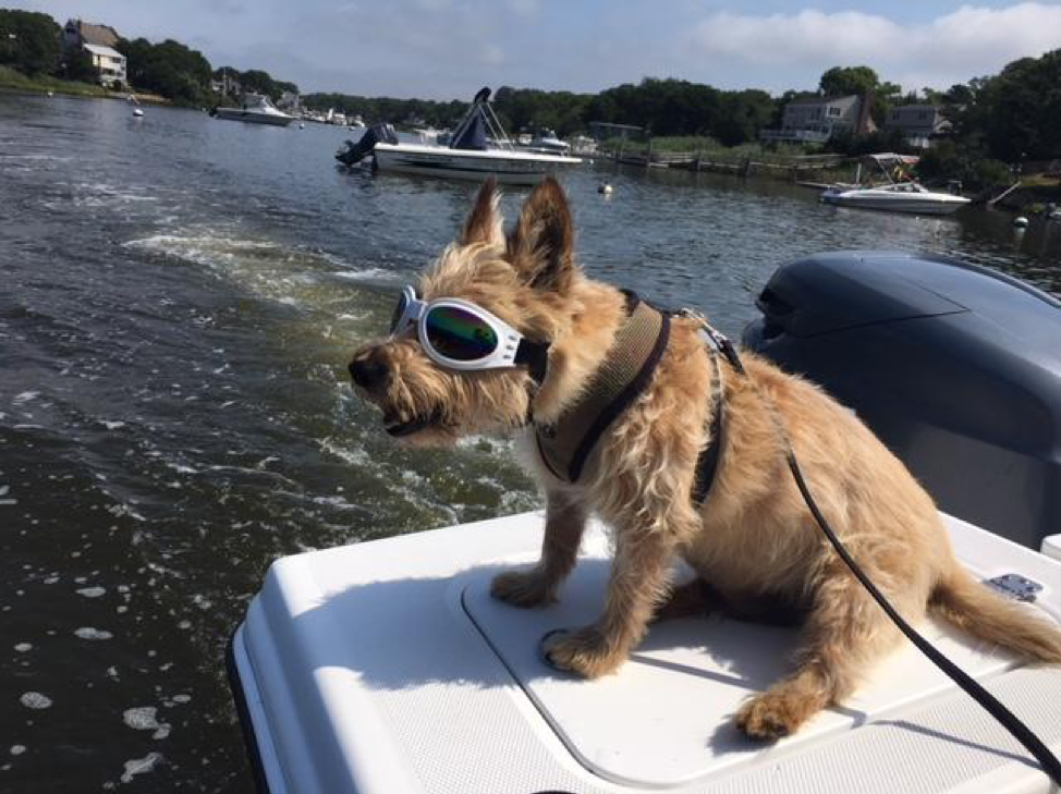 Dog with goggles on a boat