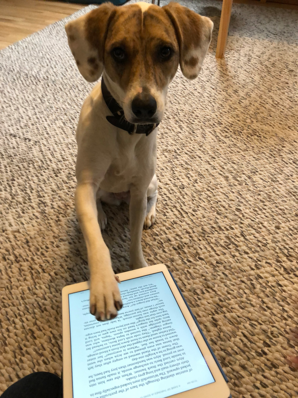 "Dog using ""shake"" gesture on an iPad running the Kindle app"